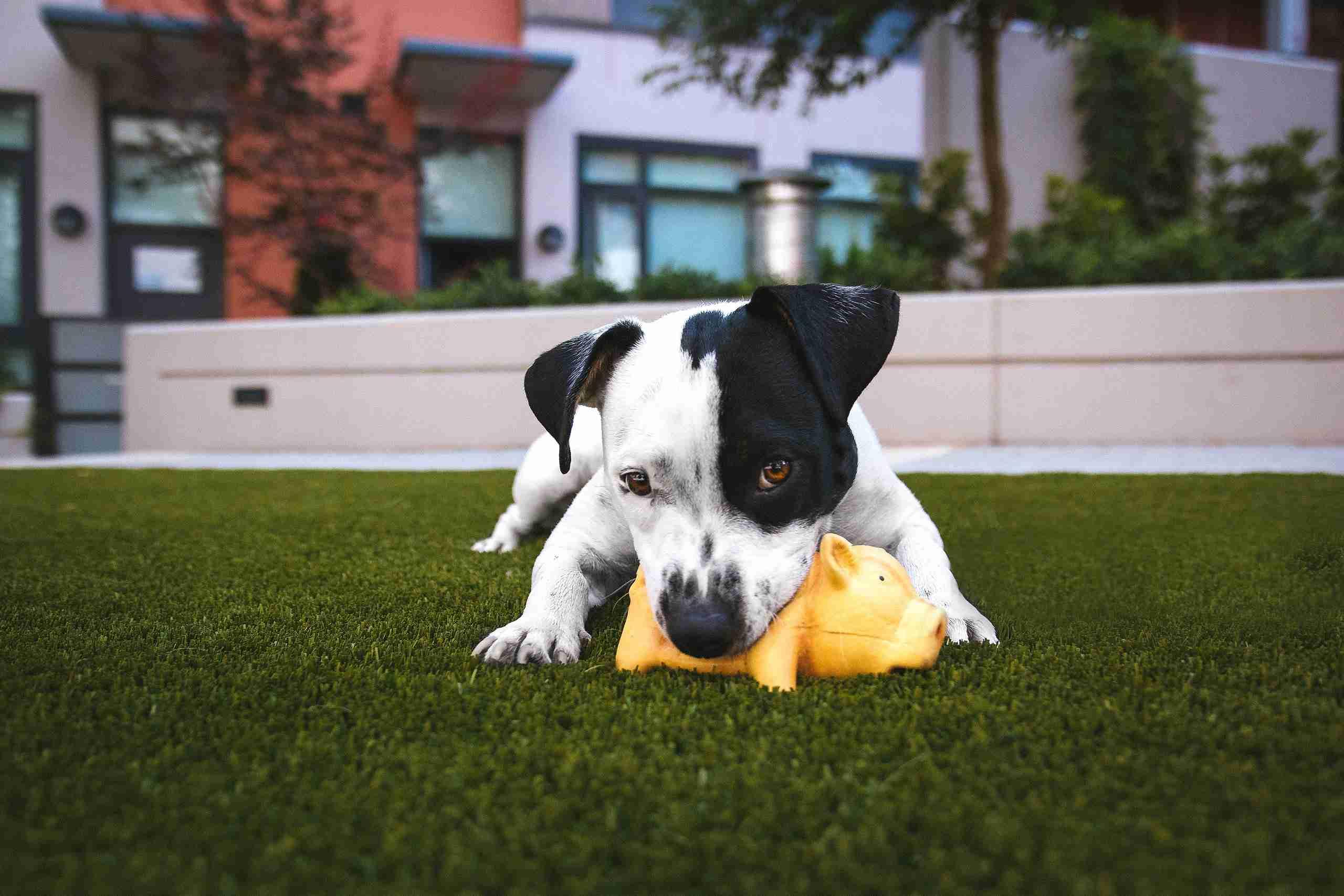 Dog Day Care Insurance