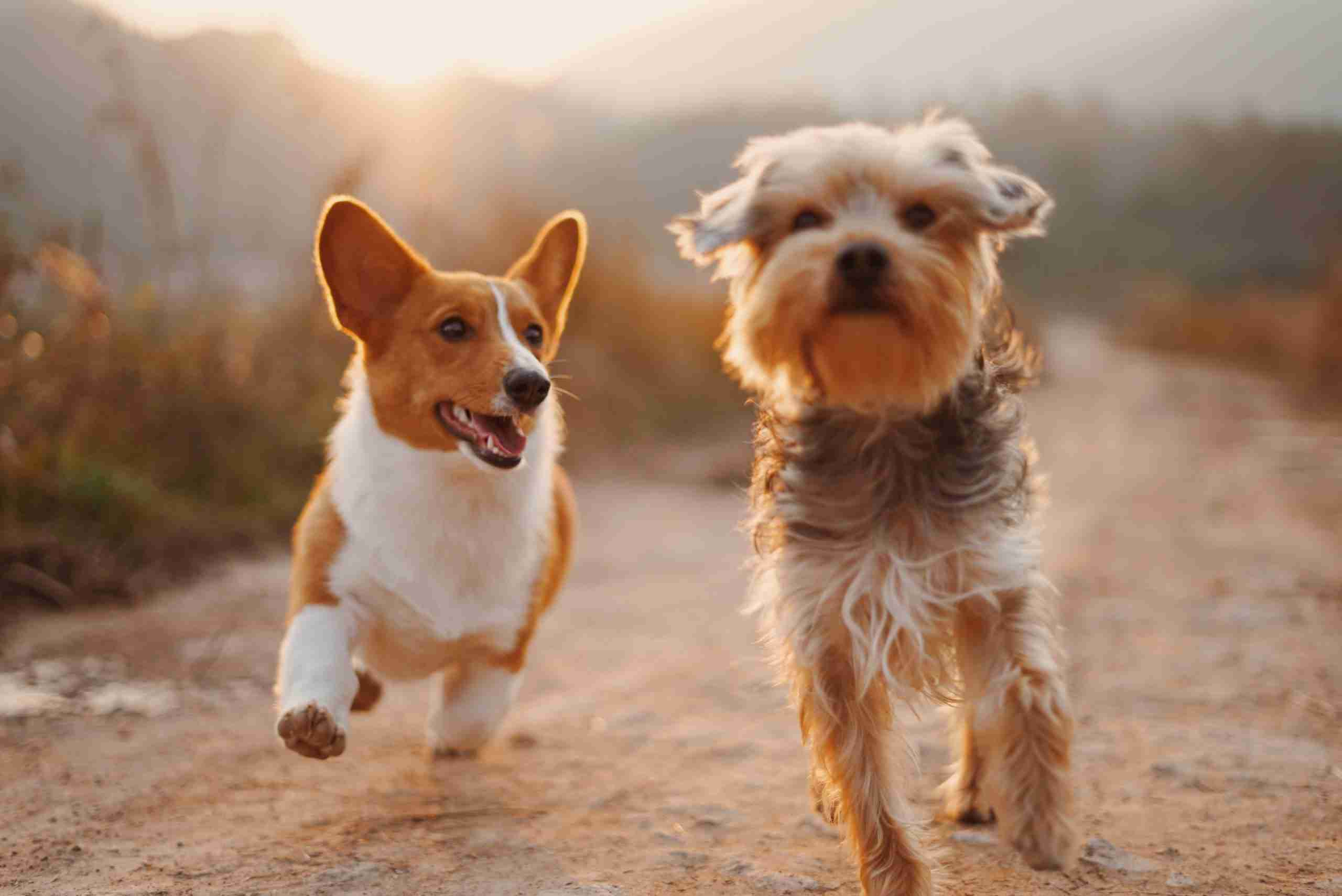 dog daycare insurance