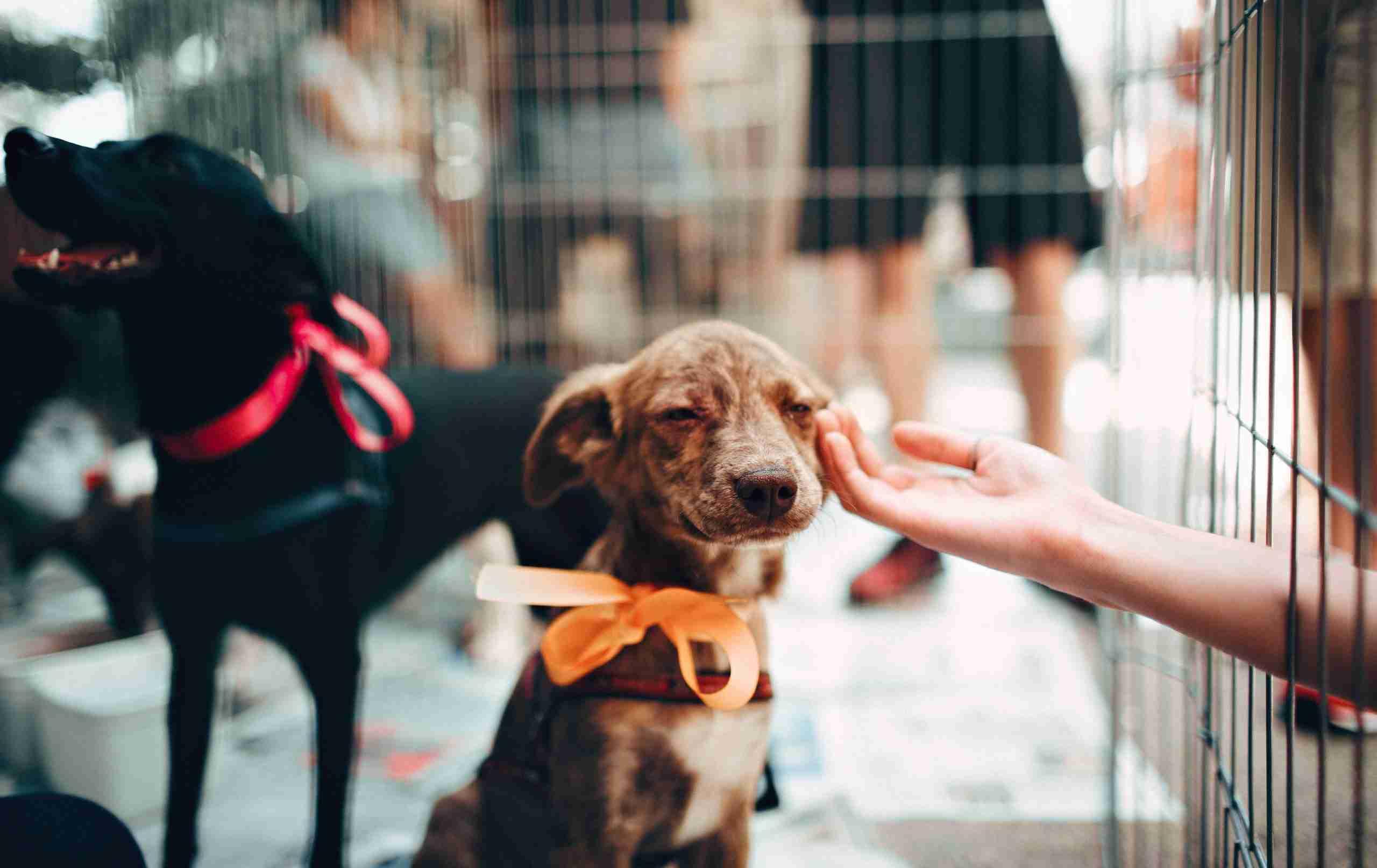 pet-shop-insurance