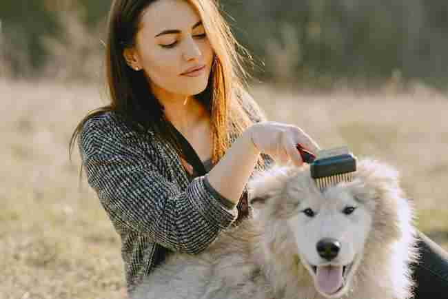 pet-grooming-tools